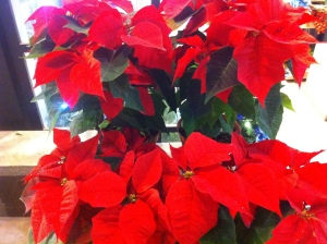 Nothing says the holiday season quite like a whole bunch of these poinsettias!
